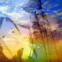 sunrise-partners-mary-lewis